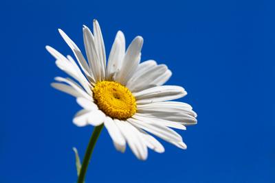 Confidence through Hypnotherapy Daisy